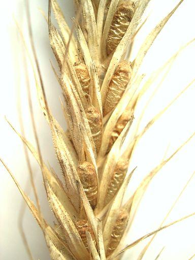 Как будут расти цены - Аграрии обсудят ценообразование на рынке зерна
